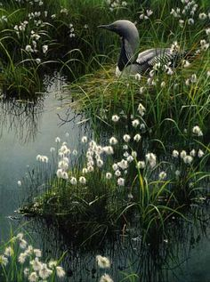 Robert Bateman - Arctic Loon and Cotton Grass