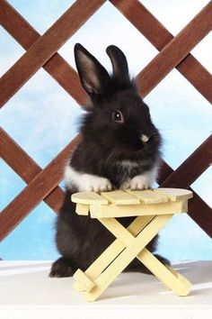 I'll have the carrot and raisin salad and a glass of carrot juice please.