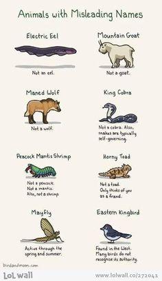 Wrong names...;)