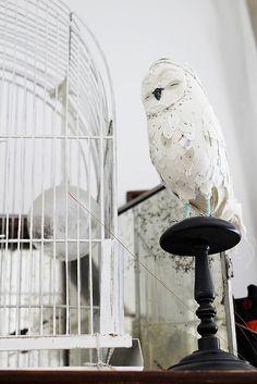 Abigail brown owl