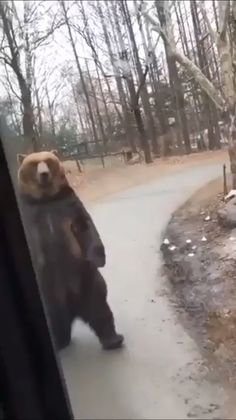 The bear and school bus click visit to see more amazing and awesome videos this summer - Monde Des Animaux Funny Animal Memes, Cute Funny Animals, Funny Animal Pictures, Cute Baby Animals, Funny Cute, Animals And Pets, Cute Dogs, Hilarious, Beautiful Creatures