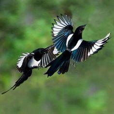 birds_09