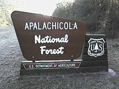 apalachicola national forest - Google Search