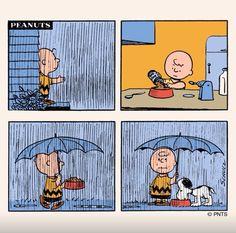 Peanuts in the rain