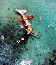 Image uploaded by 𝙾𝚛𝚜𝚊𝙼. Find images and videos about girl, sea and ocean on We Heart It - the app to get lost in what you love. Fantasy Mermaids, Unicorns And Mermaids, Real Mermaids, Mermaids And Mermen, Mermaid Photo Shoot, Mermaid Pictures, Mermaid Cove, Mermaid Art, Mermaid Paintings