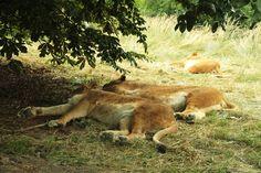 safari v Zoo Dvůr Králové