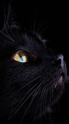 Black cat wallpaper by misia_bela - 85cd - Free on ZEDGE™
