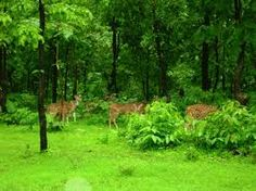 #wild #life at #silvassa http://www.silvassa.co.in/