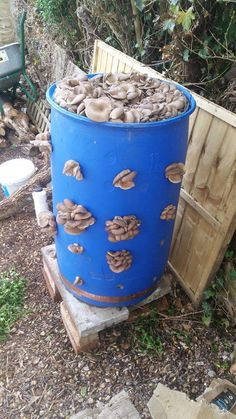 Most people who go in for mushroom growing just go out and buy both the spores (or spawn) and the growth medium. They do this because this is the easiest way to grow mushrooms. But if you are thinking of growing mushrooms commercially Garden Mushrooms, Edible Mushrooms, Stuffed Mushrooms, Growing Mushrooms Indoors, Growing Vegetables, Mushroom Grow Kit, Mushroom Cultivation, Outdoor Garden Decor, Plantation