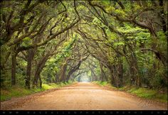 Charleston SC Edisto Island South Carolina - Botany Bay Road | Flickr - Photo Sharing!