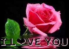 Love rose quote
