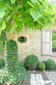 windows, shutters, boxwood, bricks