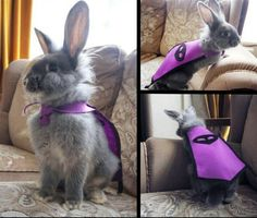 Post with 0 votes and 181 views. Meet Loki the Rabbit. Master of Thievery! Rabbit Life, Fox And Rabbit, House Rabbit, Animals And Pets, Baby Animals, Funny Animals, Cute Animals, Cute Baby Bunnies, Cute Babies