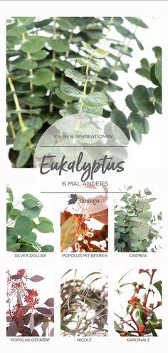 die 215 besten bilder von eukalyptus liebe in 2019. Black Bedroom Furniture Sets. Home Design Ideas