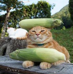 """Corn on the cat!"""