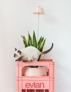 Via Zilverblauw | Home with Colour | Cat | White and Pink | Nordic