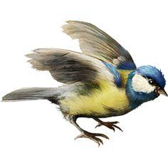 ldavi-paintersfaeries-bird1.png ❤ liked on Polyvore featuring birds