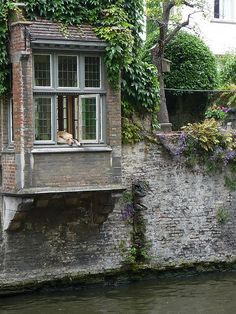 Famous Labrador in Bruges (Belgium) watches canal cruises all day. The dog was also seen in the movie 'In Bruges' #dogs
