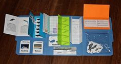 Whales and Dolphins Lap Book - I like this format, for all kinds of cutting/gluing/coloring/writing projects