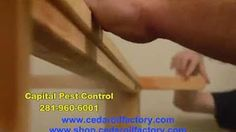 CEDAR OIL - YouTube Cedar Oil, Bed Bugs, Pest Control, The Creator, Learning, Housekeeping, Youtube, Natural, Green