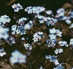 aesthetic, flowers, grunge, hipster, indie, nature, pale, pastel, plants, pretty, sad, soft grunge, tumblr