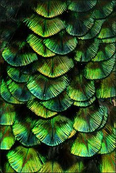 Green is my favorite color. It is the color of life and renewal. It is nature's neutral and if you look in a garden you will discover that it goes with every color. Patterns In Nature, Textures Patterns, Color Patterns, Foto Art, Color Of Life, Bird Feathers, Coloured Feathers, Shades Of Green, My Favorite Color