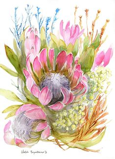 Protea Watercolor Print Watercolor Protea Painting Home Decor Floral Illustration Protea Art Protea Plant Wall Art Protea Giclee Art Print Watercolor Cards, Watercolor Print, Watercolor Flowers, Watercolour Paintings, Botanical Art, Botanical Illustration, Illustration Art, Protea Art, Protea Flower