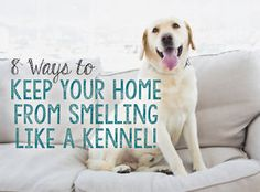 8 Ways to Keep Your Home From Smelling Like a Kennel   eBay