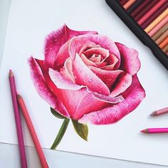 Simple rose drawing for all of you Colored Pencil Artwork, Coloured Pencils, Color Pencil Art, Pencil Art Drawings, Rose Drawings, Plant Drawing, Painting & Drawing, Art Floral, Watercolor Flowers