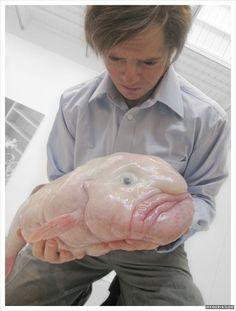 Blobfish: rare and incredibly ugly sea creature