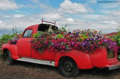 This is the most beautiful truck garden.