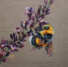 Foxy - Georgina McMaster - Strathearn Gallery Bee Illustration, Botanical Illustration, Bee Painting, Painting & Drawing, Animal Drawings, Art Drawings, Skull Tatto, Insect Art, Bee Art
