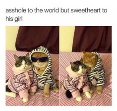 """Caturday Memes For The Feline Lovers - Funny memes that """"GET IT"""" and want you to too. Get the latest funniest memes and keep up what is going on in the meme-o-sphere. Funny Animal Pictures, Cute Funny Animals, Funny Cute, Best Funny Pictures, Cute Cats, Funny Photos, Adorable Kittens, Stupid Funny, Funny Stuff"""