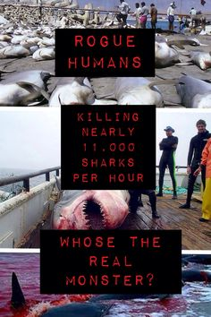 Crappy thing I made about saving the sharks Save the sharks! Made by me (Gabby Creeper)
