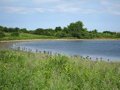 Places to Go for Watching the #Wildlife in #Queens | NY Mom's World Blog