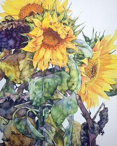 My name is Margaret, art and photography lover, enthusiast of good coffee & pets, and the. Sunflower Art, Watercolor Sunflower, Watercolor Flowers, Watercolor Artists, Watercolor And Ink, Watercolor Paintings, Graffiti Kunst, Paint Paint, Art Aquarelle