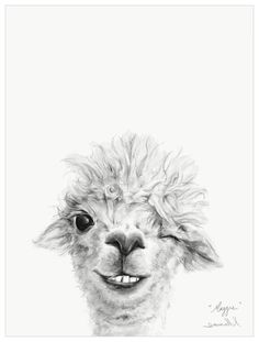 Animal Drawings Llama Draw You A Portrait - Maggie Wall Art - Meet Maggie! Shop this and more adorable animal art from Kristin Llamas. Alpacas, Cute Animal Drawings, Art Drawings, Painting Prints, Painting & Drawing, Body Painting, Art Prints, Llamas Animal, Llama Drawing