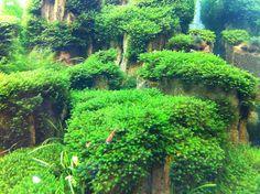 Aquarium moss tank