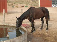 Quarter Horse Gelding For Sale in Texas   @AHomeForEveryHorse