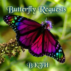 rainbow monarch butterfly requests