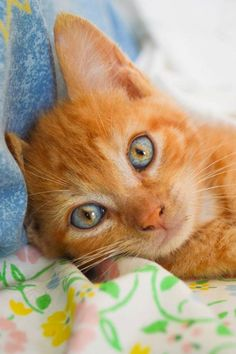 Cute kitten with beautiful eyes and ginger fur