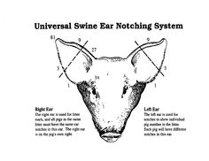 pig ear notches | Universal Swine Ear Notching System