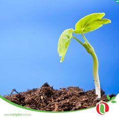 A Nutriplan traz o melhor para você! São mais de 1000 produtos, incluindo linhas de floricultura, jardinagem, adubos e terras especiais. Faça-nos uma visita!
