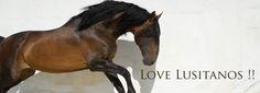 http://www.lusitanohorsefinder.com/lusitano-horses-for-sale/