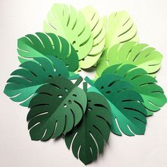 * Handmade in Australia * Set the scene for your tropical, safari or jungle party with paper monstera leaves. Ombre green collection - you receive 4 of each of the 5 colours. 20 x medium Leaf Shapes - each approx 18cm x 12cm My original design, precision cut from lightweight