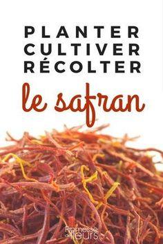 #safran #culturesafran #crocusasafran #crocussativus