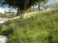 SQLA Inc. // West Hills Planting Commercial Landscape Design, West Hills, Planting, Plants