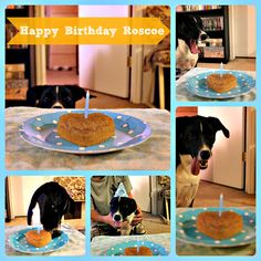 I SO meant to post this yesterday, but I was so busy celebrating me and my husbands anniversary, and getting ready for our vacation, that I forgot! Our pup, Roscoe, turned 1 year old yesterday!! Ye…