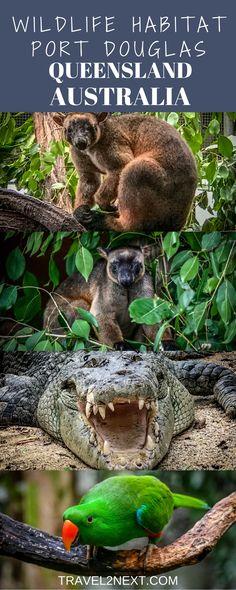 Wildlife Habitat Port Douglas is an interactive sanctuary north of Cairns, Queensland, Australia.