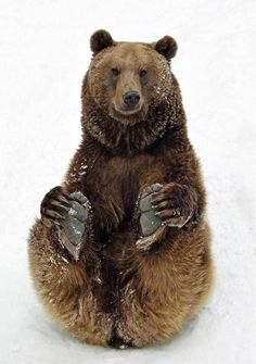 Bear so cute